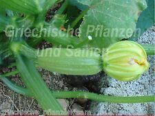 Griechische hellgrüne Zucchini 6 fresh seeds Vegetables for frillen Rare