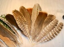"""26 Mixed Lot Real Feathers Turkey Peacock Natural Shed Smudging Craft 9-11"""""""