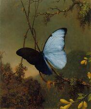 Martin Heade Blue Morpho Butterfly Handmade Oil Painting repro