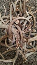 1 lb Deer Antler Dog Chews, Small Deer Antlers