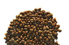 New listing 100 Seeds Honey Locust Tree Honeylocust Gleditsia triacanthos
