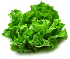 Lettuce Seed 400 Seeds Romaine Lettuce Bulk Seeds Organic Vegetables