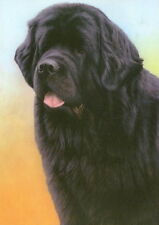 More details for nigel hemming just dogs - black newfoundland newfs newfies working dogs art