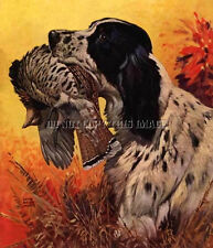 Antique Photograph Reprint 8X10 Ruffed Grouse Hunting English Setter Bird Dog