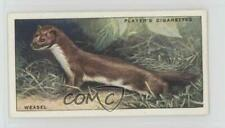 1939 Player's Animals of the Countryside Tobacco #16 Weasel Non-Sports Card 2u1