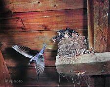 1950's Vintage NATURE LANDSCAPE Baby Birds Nest Photo Art By ELIOT PORTER 11x14