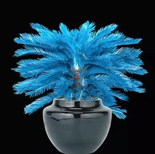 100pcs/bag blue Cycas seeds, Sago Palm Tree seeds bonsai flower seeds