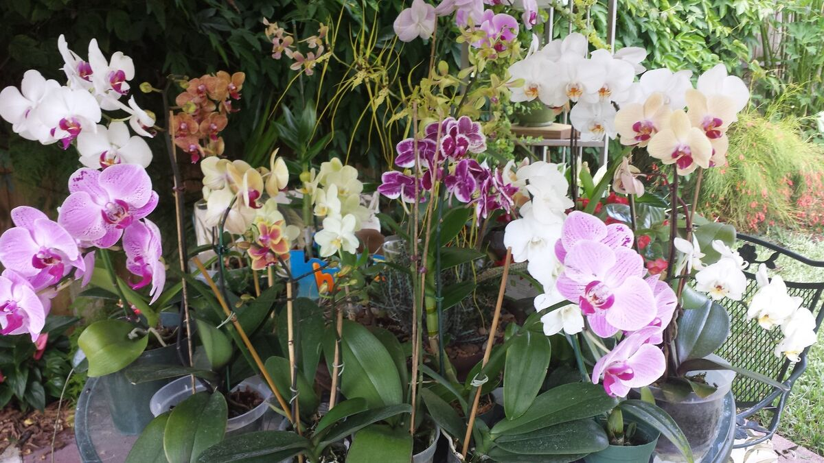 B s Tropicals and more