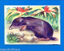 ANIMALI - Lampo 1964 - Figurina-Sticker n. 27 - TALPA -New