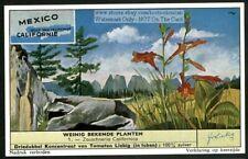 Wild California Fuchsia Plant Flower 50 Y/O Trade Ad Card