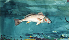 Winslow Homer Watercolor Reproductions: Channel Bass: Fine Art Print