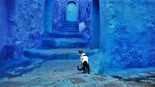 Cat in Blue City - on Canvas - Morocco, Africa - Travel Pets Dogs Wall Art Decor