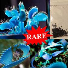100pcs Bluebell Rare Venus flytrap plant seeds terrace Carnivorous Plant Seeds