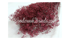 Preserved Violet Babys Breath Stardust Dried Floral Flower Foliage Filler