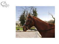 Ekkia Elasticated Training Aid One Size Side Reins Lunge Schooling FREE P&P