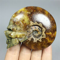 Pretty Natural Conch Ammonite Fossil Hand Carved & Polished Crystal Skull 96g