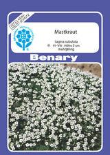 Benary - Mastkraut, Sternmoos, Plattenmoos, Sagina subulata, ca. 800 Samen