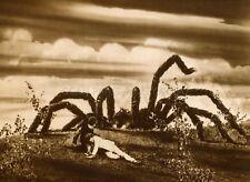 KINGDOM OF THE SPIDERS  1975 VINTAGE PHOTO ORIGINAL #9  SCI-FI  HORROR B-MOVIE