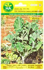 Col Gigante Berza Gallega - 3000 Semillas (10 Gramos) - Sobre Hermético HA