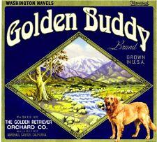 Marshall Canyon Golden Buddy Retriever Dog Orange Citrus Fruit Crate Label Print