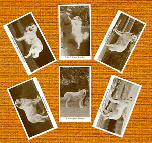 PYRENEAN MOUNTAIN DOG SET OF SIX NAMED DOG COLLECTABLE TRADE CARDS GREAT GIFT
