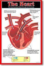 Heart - Anatomy Biology Science Classroom School Body  - NEW POSTER