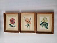 """Vintage Lot of 3 BOTANICAL Flower Prints with 6 3/4"""" x 7 3/4"""" Frame"""