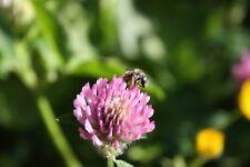 Lawn Seeds Wild Flower Mix 100% Native Plants 13 Species Low Maintenance Garden