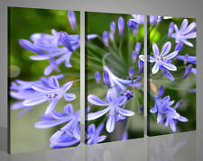 Quadri moderni Plureal flower fiori viola stampe su tela canvas 130 x 90