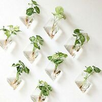 Wall Mounted Glass Mini Vase Wall Hanging Planter Plant Flower Pot Small Plants