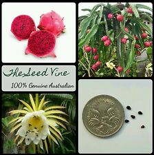 10+ RED DRAGONFRUIT SEEDS (Hylocereus costaricensis) Pitaya Edible Fruit Cactus