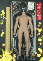 Phicen M30 Super-Flexible Male Seamless Muscular Body 1/6