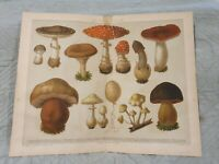 Poisonous Mushrooms - Antique Book Page - c.1885 - German Text