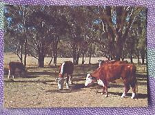 Rare Vintage Post Card ...WINTON (QLD) HOME OF WALTZING MATILDA