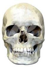 Skull Horror Prominenten Papp Maske - hochwertiger Glanzkarton mit Augenlöchern