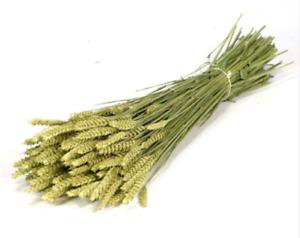 Spighe di grano mazzo da 100 spighe