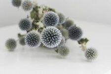 Beautiful Natural Air Dried Blue Globe Thistle Echinops Bundle Decorated Floral