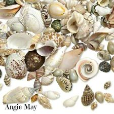 1/2 lb Beautiful Mix Sea Shell Drops Assorted Seashell Charms with Drilled Holes