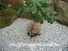 50 Kg Edel Granitsplitt Splitt Zierkies Kies Naturstein Granit Japan Zen Garten
