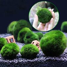 Giant Marimo Moss Ball Cladophora Live Aquarium Plant Fish Aquarium Decor 3-4cm