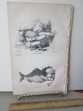 Vintage Print,SMOKER,Gold Fish,Graham Magazine,c1850s