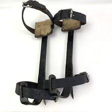 """Vintage 16"""" Klein & Sons Tree Climbing Belt Gaffs Spikes Usa"""