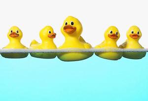 Framed Print - Rubber Ducks Bobbing on the Water (Animal Picture Bathroom Art)