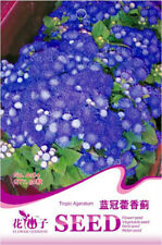 Original Package 50 Tropic Ageratum Seeds Blue Ageratum Conyzoides Flowers A184
