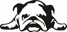2 x TIRED ENGLISH BULL DOG CAR VAN BUMPER DECAL STICKER JDM  FRIDGE LAPTOP