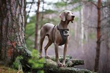 KURGO TRU FIT DOG HARNESS WITH CAMERA MOUNT