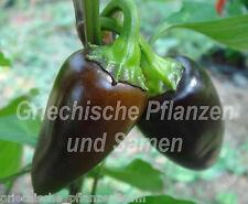 🔥 🌶 Jalapeno Purple * Chili paprika lila negro * 10 semillas