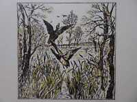 Radierung - signiert - auffliegende Enten im Schilf