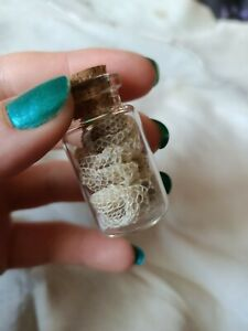 Jar of Snake Shed Skin Dry Real Taxidermy Wicca NewAge Craft Spell Supplies 🐍