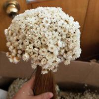 30x Natürlich Getrocknet Blume Mini Daisy Strauß Hochzeit Geburtstag Party Deko